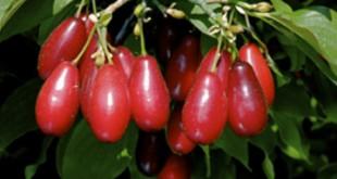 Zogalli duyu shorbasi - Rice soup with cornelian cherries