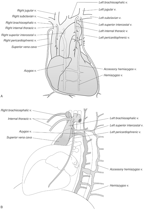 FIGURE 1-13. Diagrams of normal venous anatomy of the thorax. A: Frontal view. B: Lateral view. v, vein. Mediastinal Spaces, Lines, Stripes, and Borders