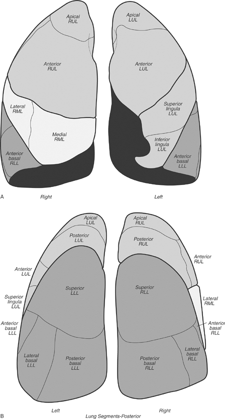 FIGURE 1-8. Diagrams of pulmonary lobes and segments. A: Anterior view. B: Posterior view. RUL, right upper lobe; RML, right middle lobe; RLL, right lower lobe; LUL, left upper lobe, LLL, left lower lobe.