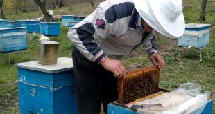 Azerbaijani beekeepers
