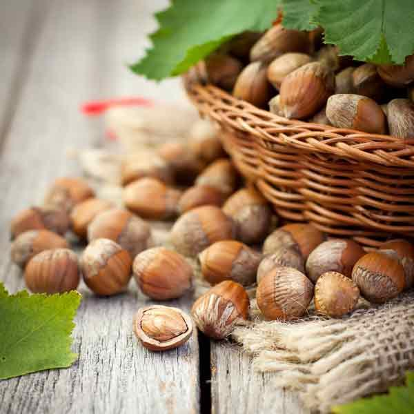 Hazelnut exports
