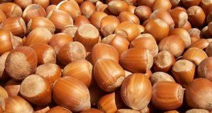 Azerbaijani company starts exporting hazelnuts to Latvia